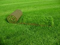 Рулонный газон- залог приятного отдыха.
