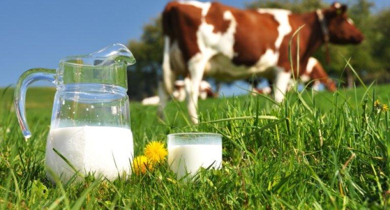 Почему молоко воняет коровой
